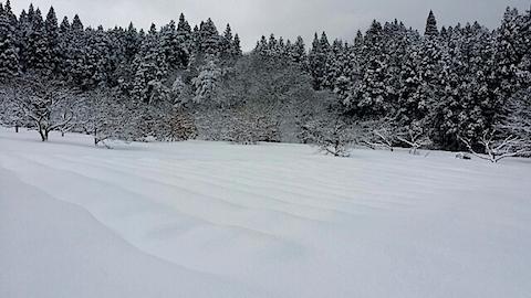 20140112ラベンダーの畑1