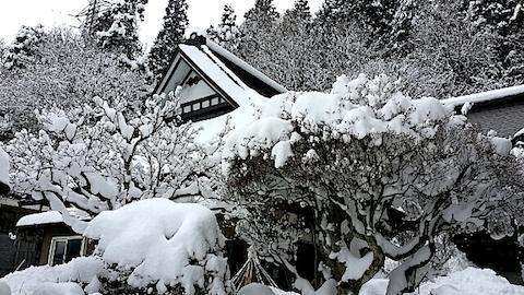 20140112雪景色