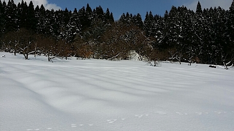 20140210ラベンダーの畑2