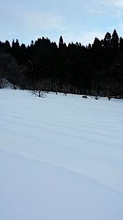201401211ラベンダーの畑1