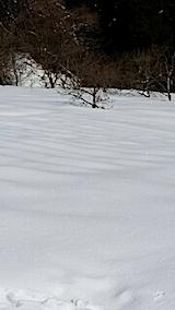 20140212ラベンダーの畑1