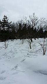 20140224八重紅枝垂れ桜のある斜面