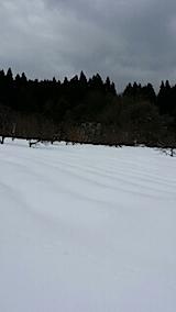 201401224ラベンダーの畑1