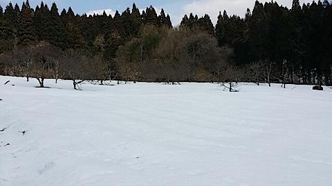 20140317ラベンダーの畑