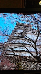 20140415鶴ヶ城の桜
