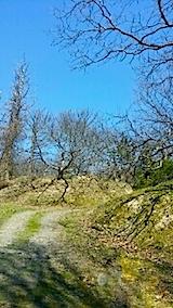 20140414ラベンダー畑へと続く急な坂道