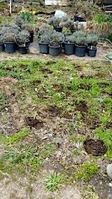 20140421鉢植えの移動と整理
