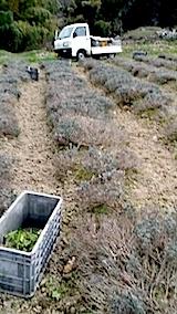 20140421入れ替えた土を畑へ4