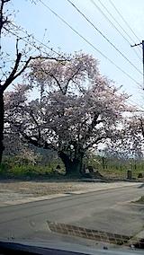 20140429米沢郊外の桜
