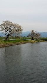 20140429寺崎の桜1