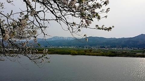 20140429寺崎の桜2