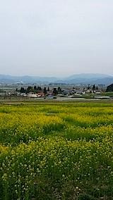20140429八木沢の菜の花畑1