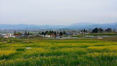 20140429八木沢の菜の花畑2