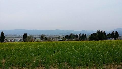 20140429八木沢の菜の花畑3