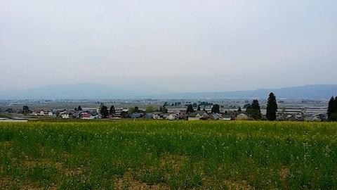 20140429八木沢の菜の花畑4