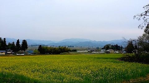 20140429八木沢の菜の花畑5