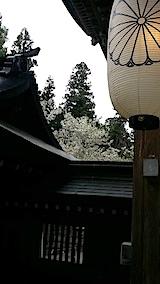 20140429薄墨桜1