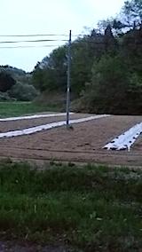 20140512カボチャの畑