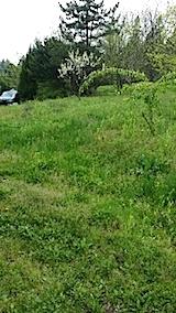 20140513草刈り前1