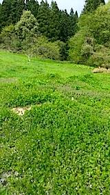 20140513草刈り後3