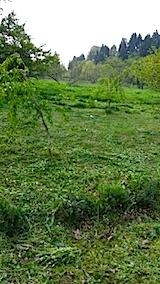 20140513草刈り後4