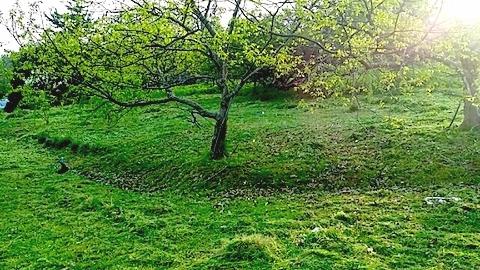20140513草刈り後5