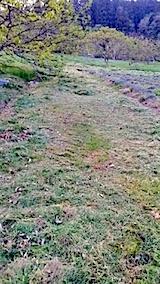 20140513草刈り後6