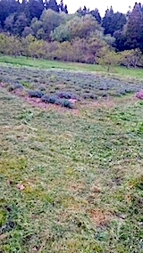20140513草刈り後7