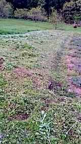 20140513草刈り後10