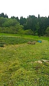 20140514ラベンダーの畑2