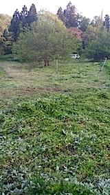 20140514草刈り後2