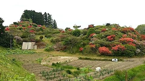 20140515ツツジの咲く丘の風景3