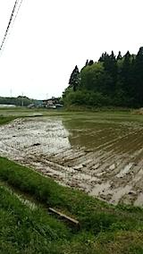 20140515田植えの済んだ田んぼ