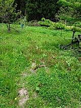 20140515草刈り前4