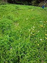 20140515草刈り前6