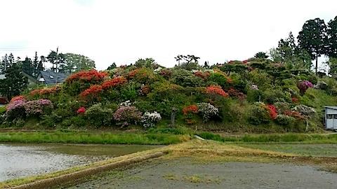 20140516ツツジの咲く丘の風景1