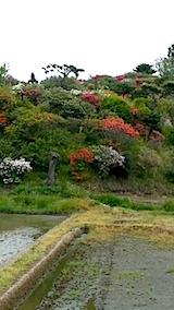 20140516ツツジの咲く丘の風景2