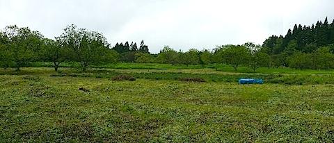 20140516ラベンダーの畑2