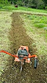 20140518ラベンダーの外周を耕す1