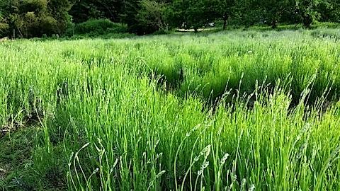 20140608ラベンダーの畑3