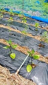 20140609野菜の畑