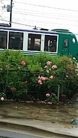 20140612雨に濡れるバラ