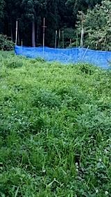 20140705草刈り前1