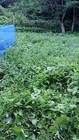 20140705草刈り前3