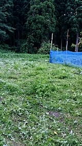20140705草刈り後1