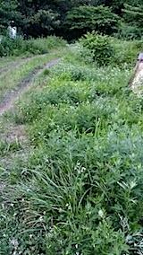 20140705草刈り前4