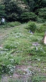 20140705草刈り後5