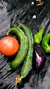 20140709今日収穫した野菜