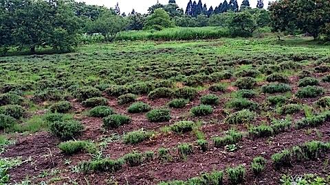 20140709ラベンダーの畑2