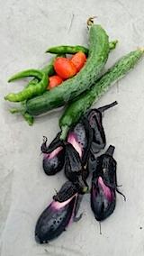 20140710今日収穫した野菜